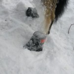 dog mushing frozen bootie