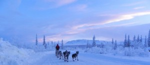 sheep mountain dog mushing