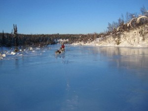overflow dog mushing