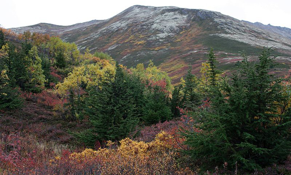 Arctic alpine vegetation, Eagle River Valley, Alaska