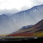 Alaskan tundra plants