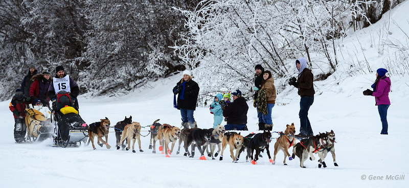 Yukon Quest sled dog ride