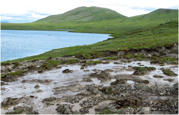 Thawing permafrost forms thermokarst at wolverine lake Alaska