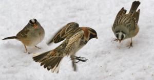 Wacky weather migratory bird apocalypse climate