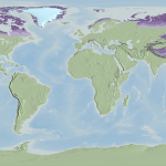 Permafrost areas are shown in lavender over light green continents. Darkest lavender represents continuous permafrost, transitioning to discontinuous then isolated permafrost coverage. / Courtesy Cindy Starr, NASA Scientific Visualization Studio