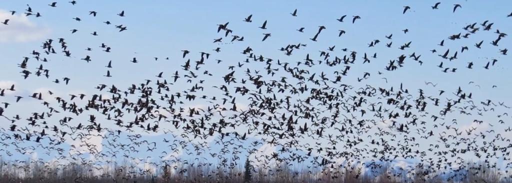 Birds across the Brooks Range migration science