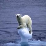 Sea ice is a polar bear conveyor belt