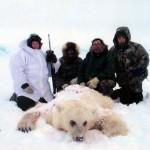 Hybrid grizzly-polar bear a curiosity