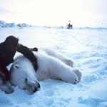 One year with a polar bear