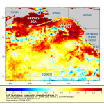 Extreme heat in the North Pacific: The Blob