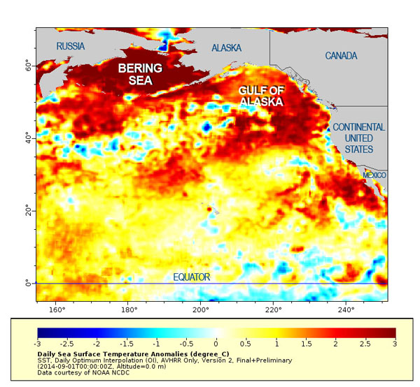 Unusually warm temperatures dominate three areas of the North Pacific: the Bering Sea, Gulf of Alaska and an area off Southern California. Temperature bar lists degrees Celsius (each increment is 1.8 F). / Courtesy NOAA NCDC