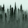 Boreal Forest Growth