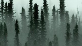ForestBoreal_ProjectSquareFogTreetops