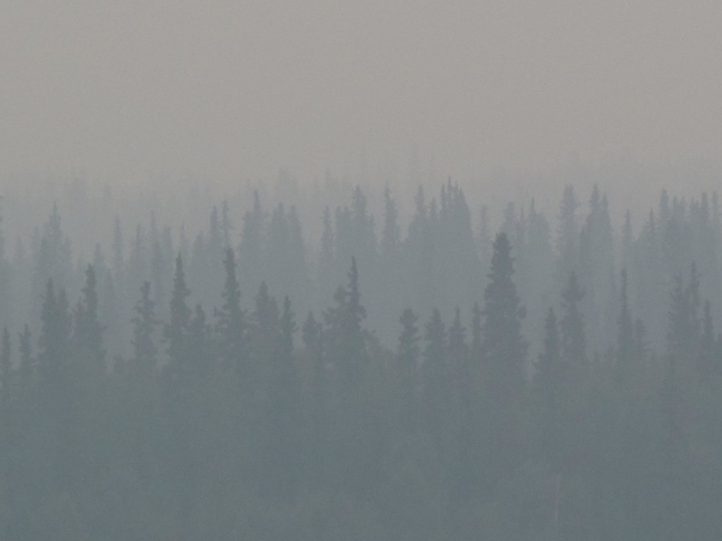 Burned Alaska forest might be the start of a different ecosystem. / Photo by Ned Rozell.
