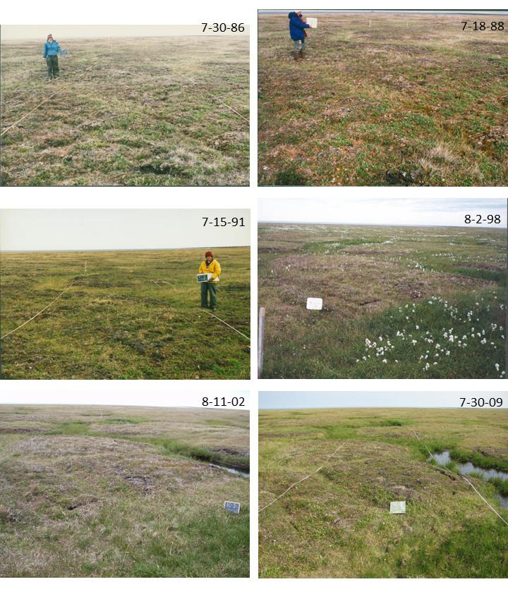 Permafrost thaw Arctic tundra sinking lower climate change