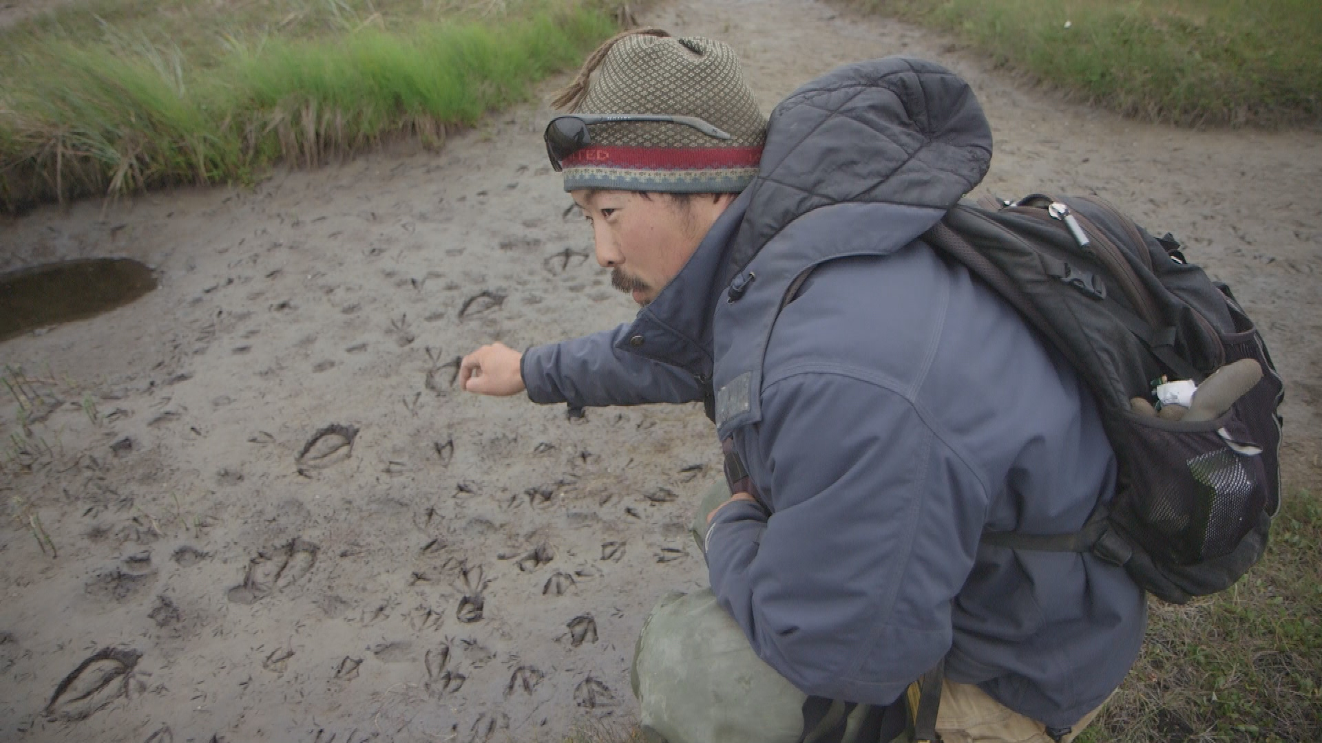 Choi pointing Black brandt tracks Geese grazing lawns experiment Yukon-Kuskokwim Delta