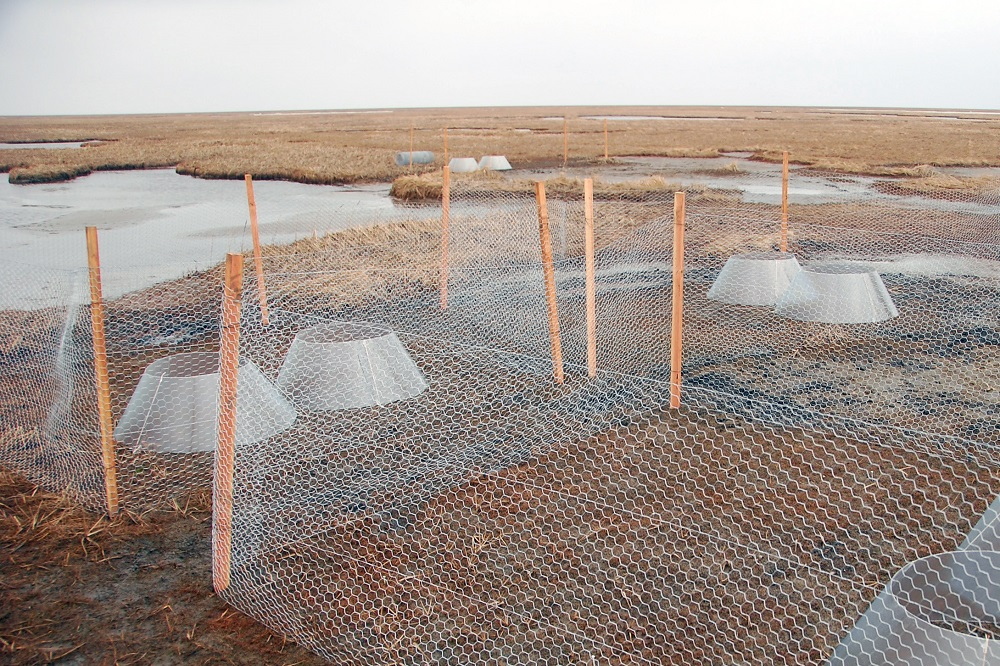 Growing vegetation interaction competition experiment Yukon Delta ecosystem