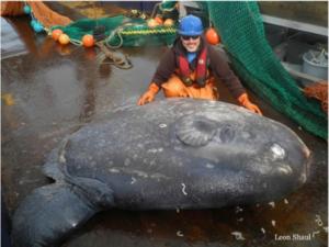 Unusual sea creatures Archives - Frontier Scientists