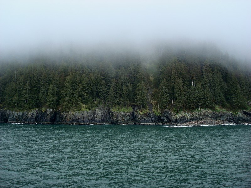 Esther Passage forest view, Prince Williams Sound / Attribution Barbara Ann Spengler (Creative Commons Attribution 2.0 Generic license)